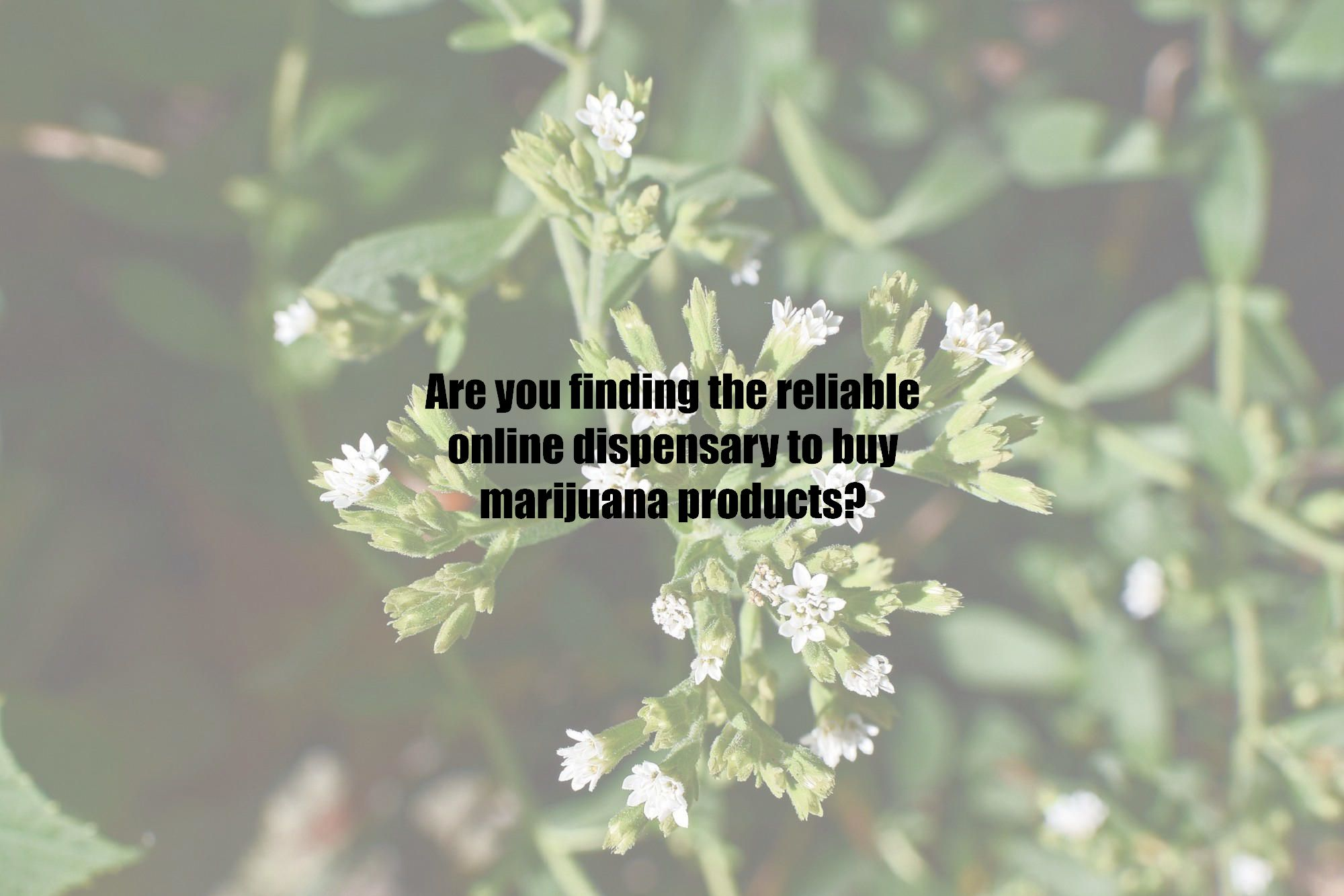 Are you finding the reliable online dispensary to buy marijuana products?